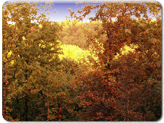 Autumn Glory in the Ozarks